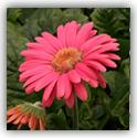 fleur_6